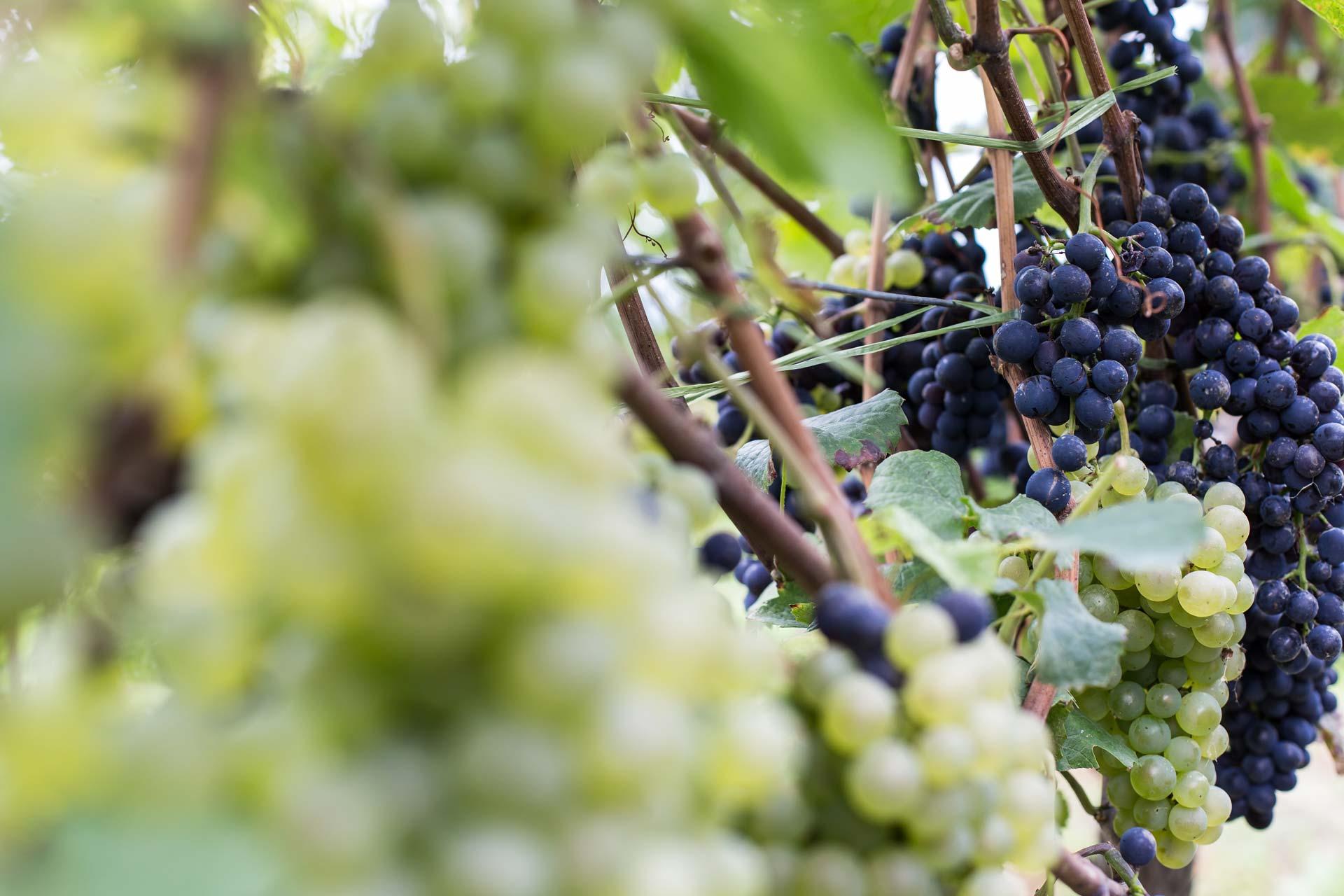 Speidel Kundenstories: Wein- und Sektgut Weber